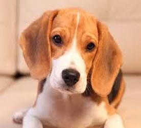Hundeskilt